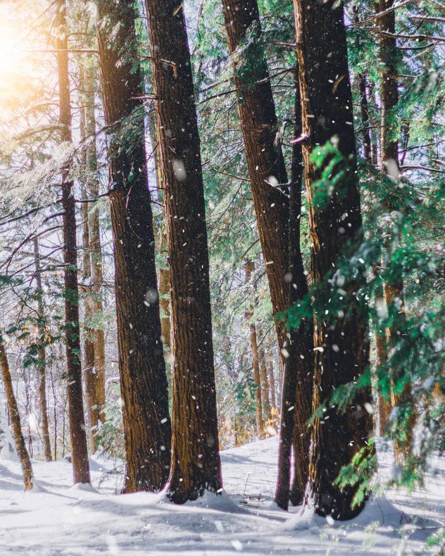 Isaiah's woods