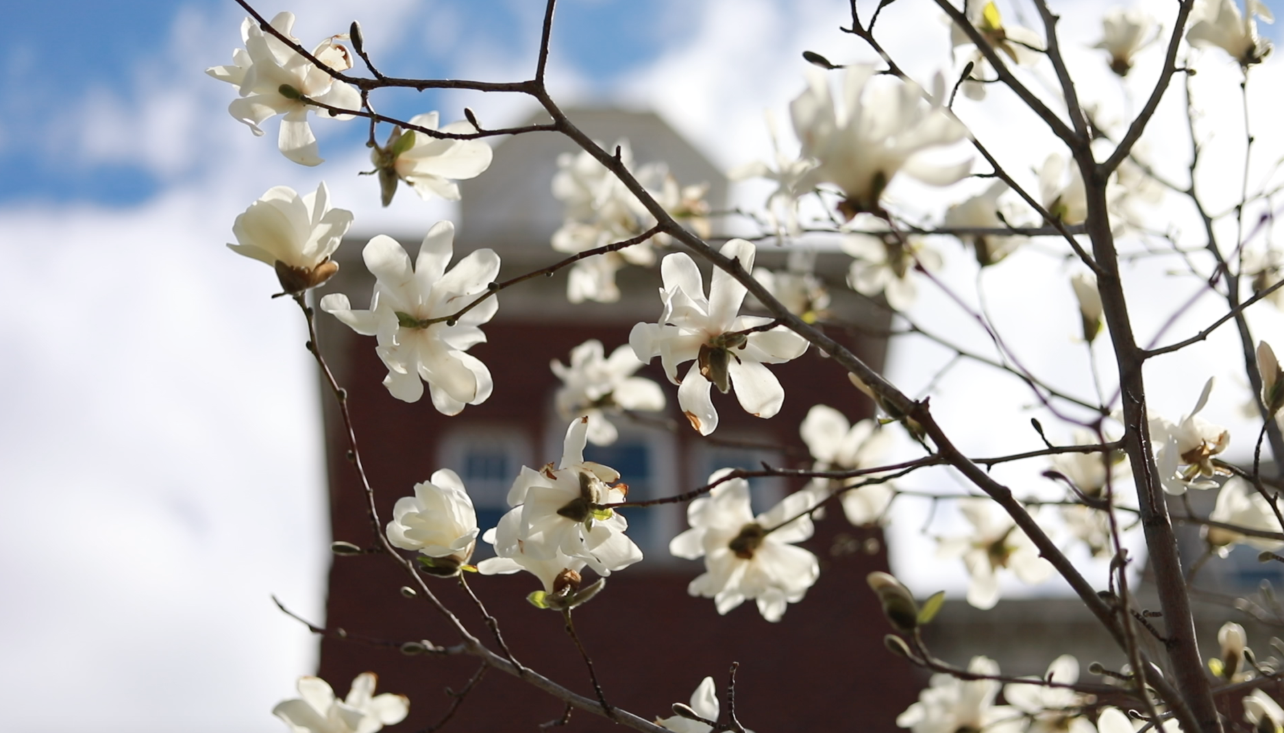 Spring Blossoms on campus