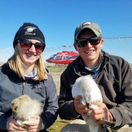 University of Maine at Farmington students Jessica Howe and Tom Dolman, both from Bethel, Conn., researching snow geese in Manitoba this summer.