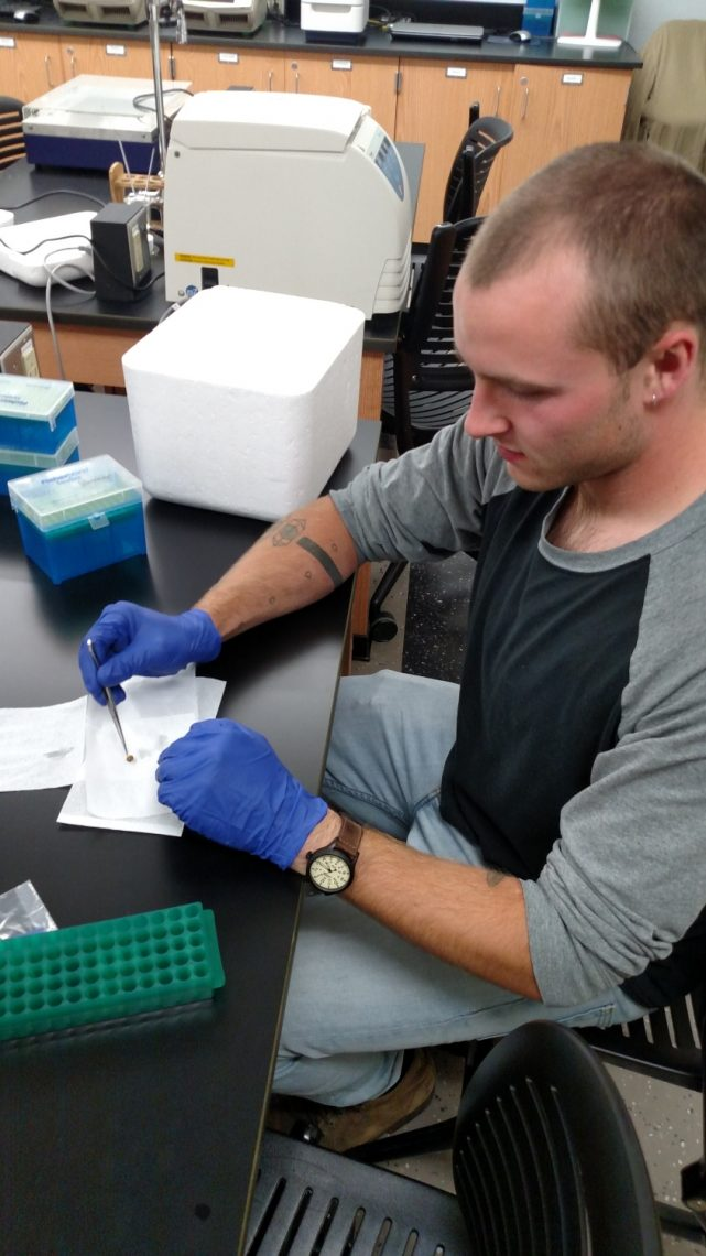 UMF student William Sampson prepares a fish tissue for DNA extraction in the Ricker Hall 220 laboratory.